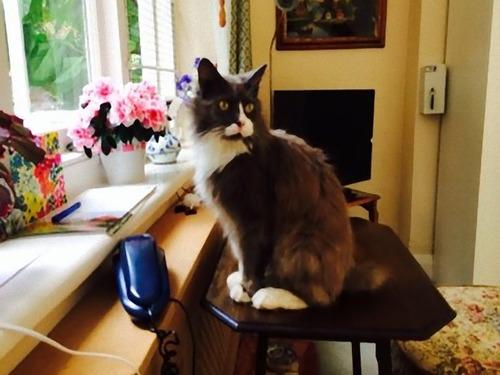 猫が飼い主を求めて施設まで03