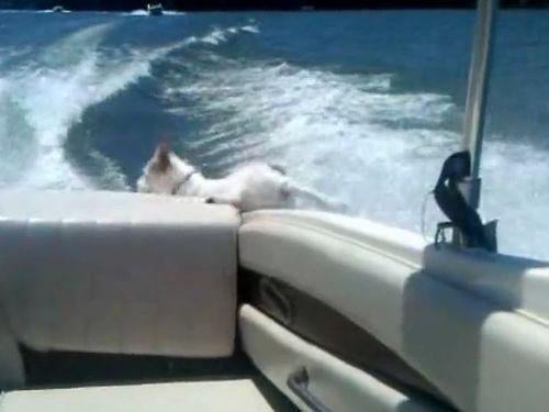 ボートから落ちた犬01
