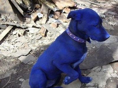 青い犬01