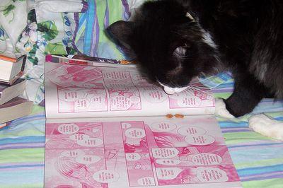 とても賢そうなインテリ猫たち11