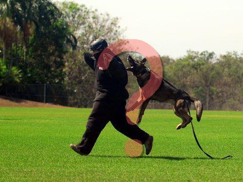 インドの警察犬00