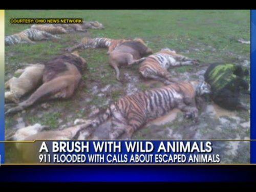 絶滅の危機にある動物が殺される00