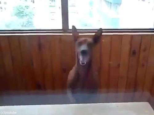 部屋に入りたい犬05