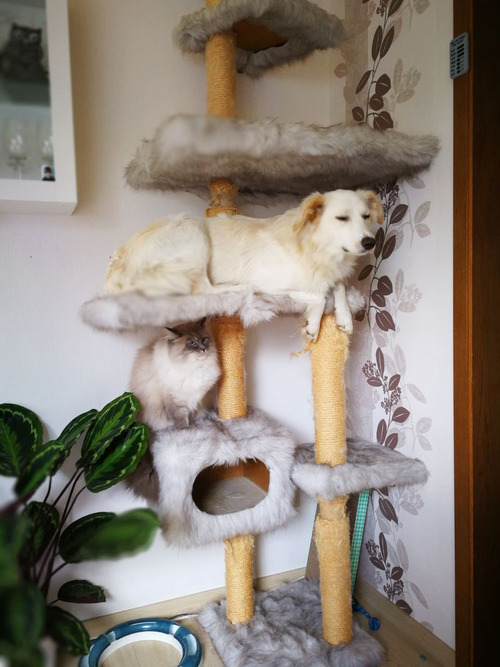 うちの犬は2匹の猫といっしょに育った01