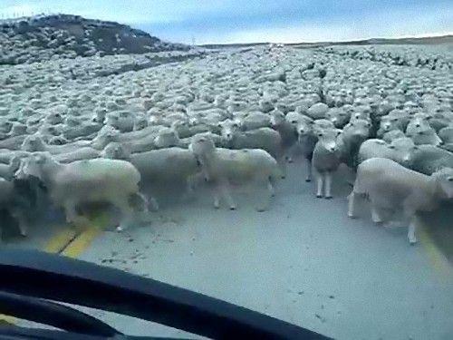 00運転中に道路で出くわす突飛ないろいろ