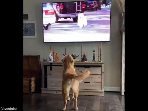 犬が活躍する動画を見た犬00