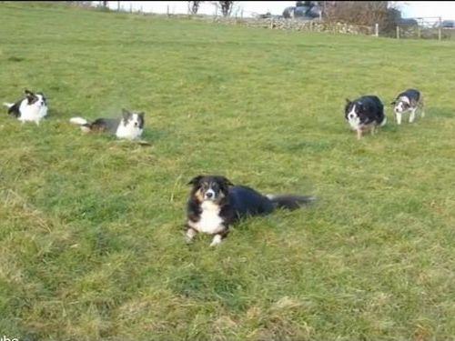 「犬が犬の背後から忍び寄る…」05