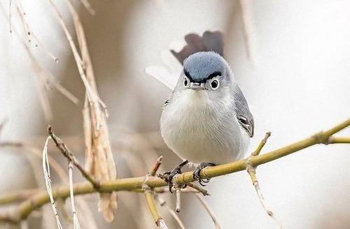 オヤジ顔の鳥01