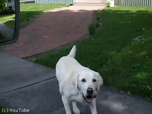 郵便受け取りをしてくれる犬02
