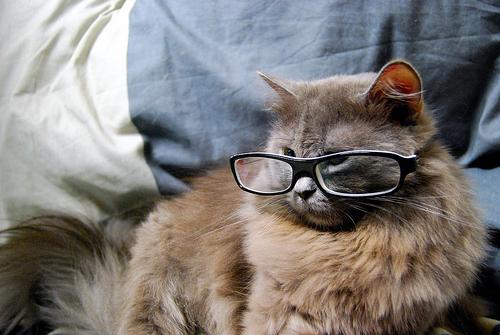 メガネ猫11