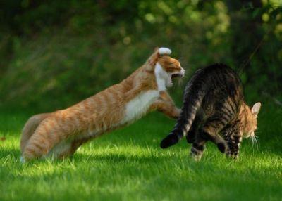 壮絶なる2匹の猫03