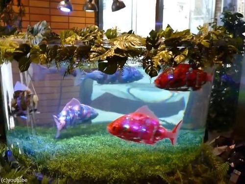 日本の魚ロボット05