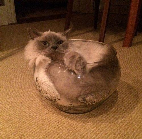 猫は液体説08