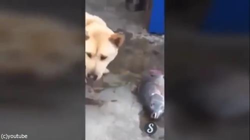 魚を助ける犬03