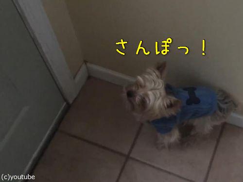 犬と初めての雪00