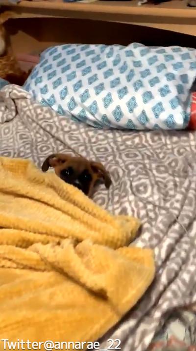 自分で毛布を掛けられるワンコ03