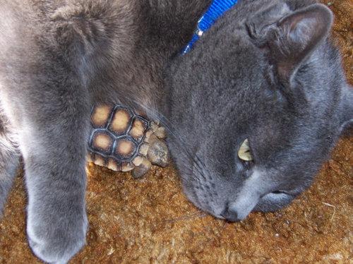 他の動物と仲良くする猫09