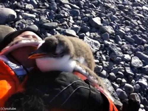 ペンギンのひなが乗ってきた05