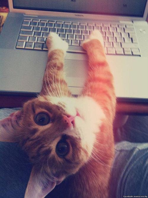 猫に生活を脅かされる13