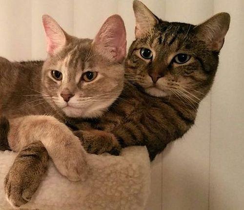 うちの猫はうちの彼女の猫のことが大好きだ02