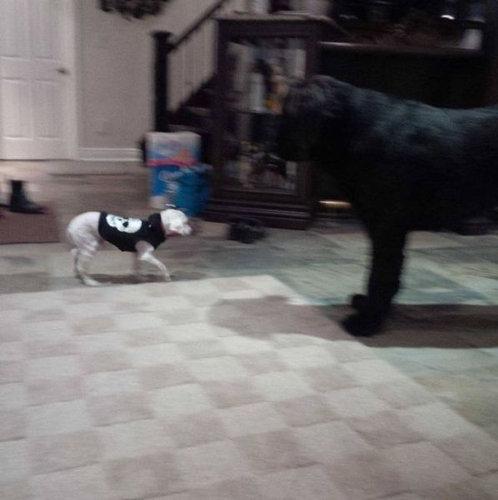 捨て犬の救助10