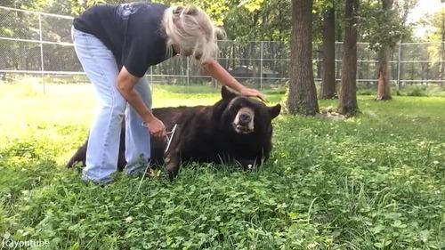 ブラッシング大好きな熊さん03