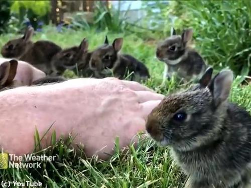 ウサギの赤ちゃんがめちゃくちゃ懐いてきた00