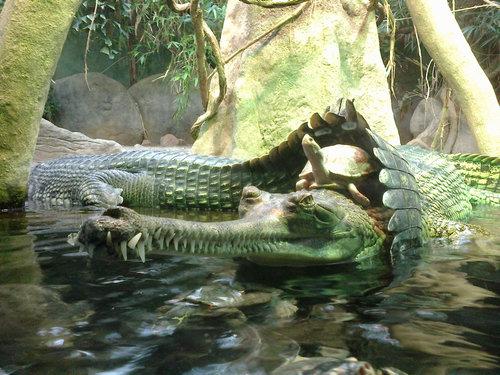 動物園で幸運な写真が撮れた01
