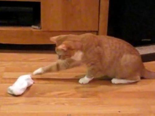 おびえる猫たち01