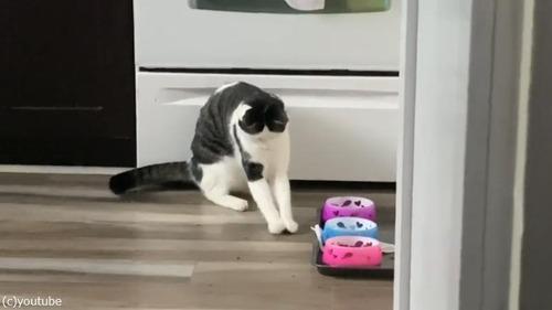 アライグマみたいにご飯を食べる猫02