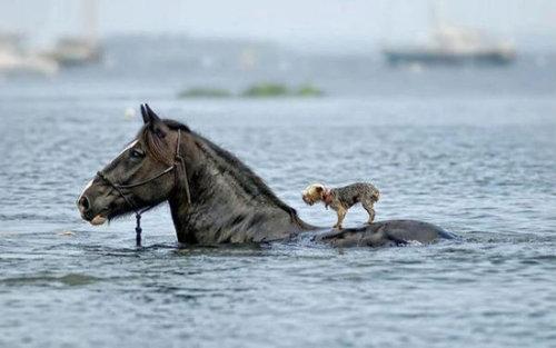 馬に騎乗する犬07