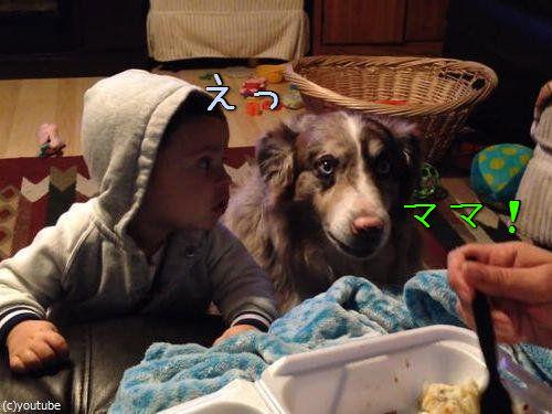 隣の犬「ママー」赤ちゃん「えっ」00