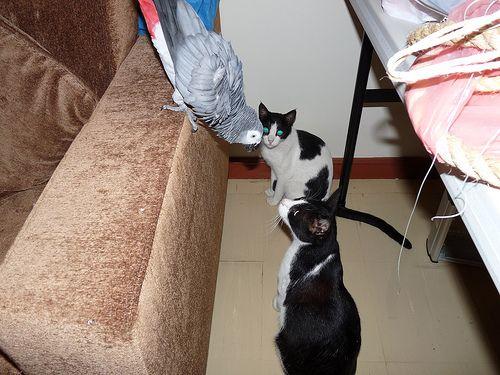 インコと猫17