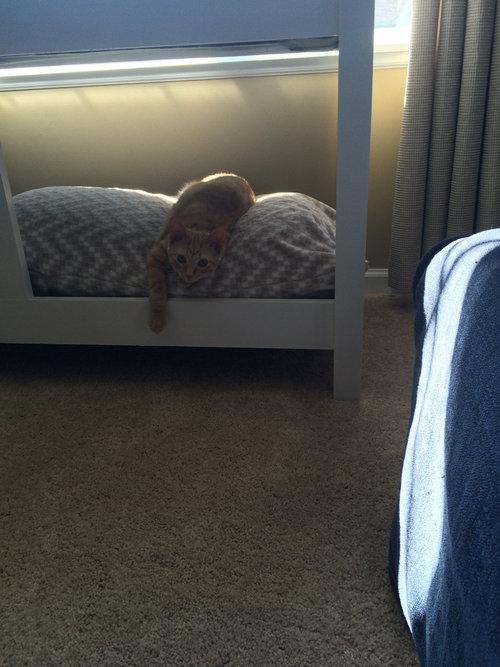 猫のための2段ベッド03