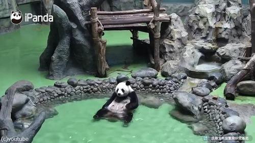 パンダの入浴風景が完全に人間01
