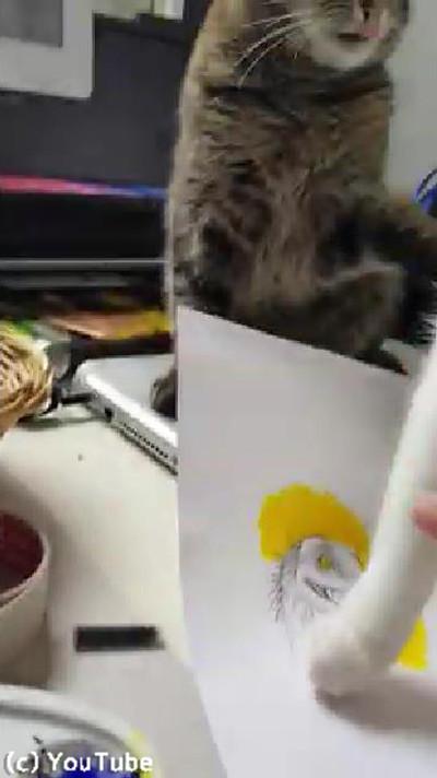 飼い主の代わりに猫を叱ってくれる猫03