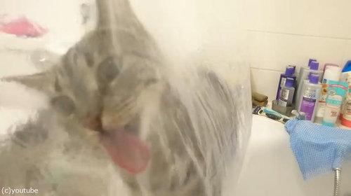 シャワーねこ04