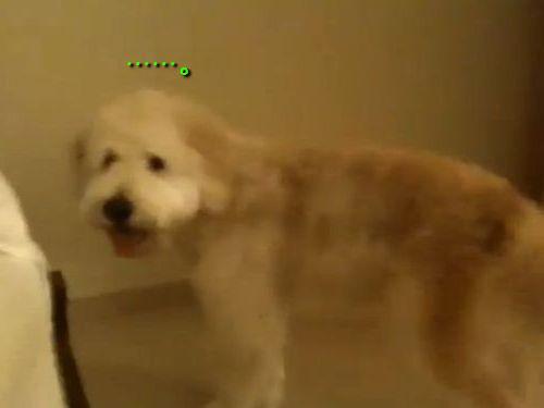 ジャンプを忘れた犬01