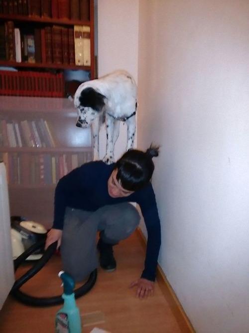 怖がりの犬10