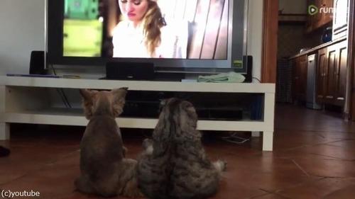 仲良くテレビを観るワンニャン01