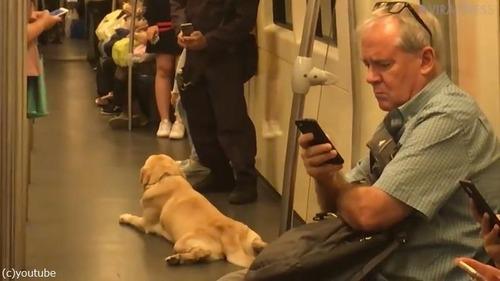麻薬犬が地下鉄でリラックス04