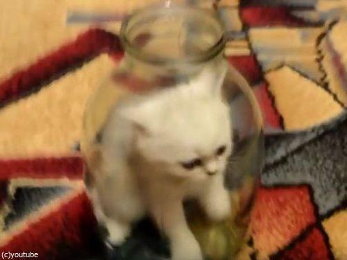 ビンの中の子猫02