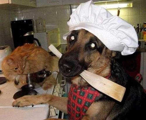 キッチンの猫07