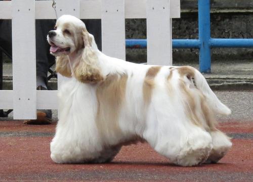 最も攻撃的な犬09