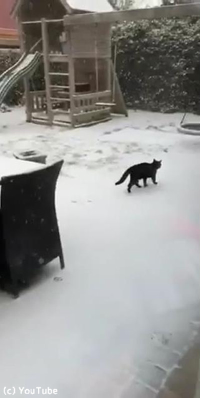 猫、雪の中でも元気いっぱい02