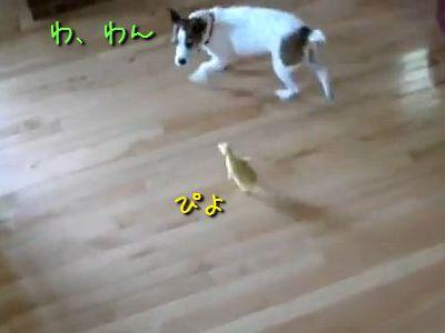 アヒルのヒナと犬の戦い
