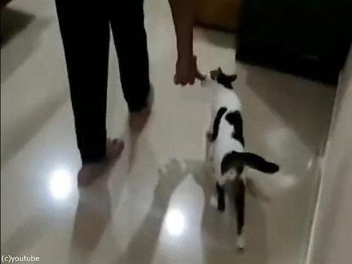 ママ猫が飼い主さんを子猫たちの元へ00