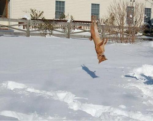 03跳ぶ・飛ぶ動物たち