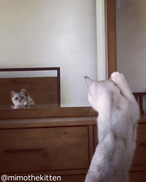 """自分の""""耳""""の存在に初めて気づいた猫05"""