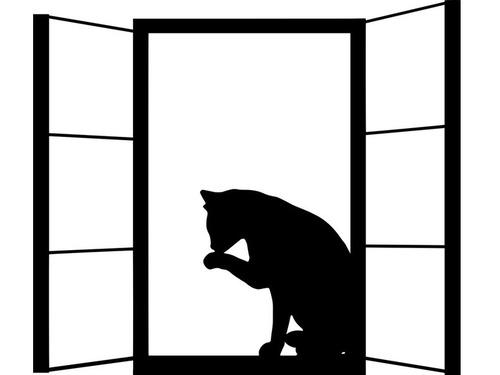 ガラス窓をよく理解できてない猫